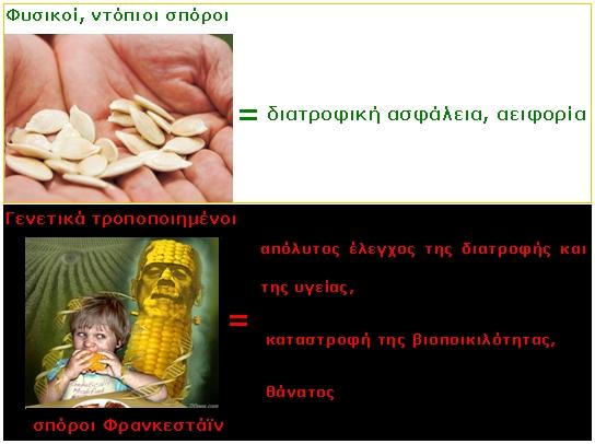 heirloom vs gmo seeds