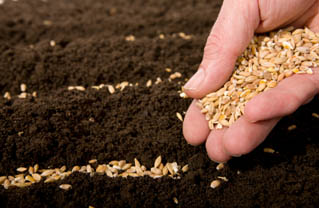 local seeds